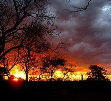 Niassa Reserve - Cabo Delgado, Mozambique by TomLEP