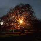 Light through the tree by ANDREW BARKE