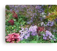 Wild Aster Fun Canvas Print
