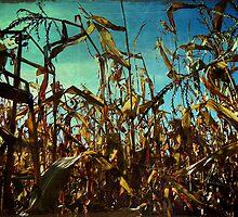 The Cornfields Rise Above Mankind by Josephine Pugh
