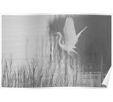 Ardea Alba - Great White Egret | Hampton Bays, New York  Poster