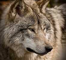Wolves Only by Tracey  Dryka