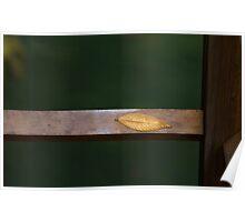 Leaf Zen Poster