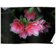 Azaleas - Dark Glow Poster