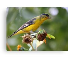 Goldfinch on Seedheads Canvas Print