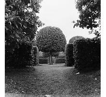 Sculpted garden Photographic Print