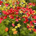 Fall Leaves in Zion Canyon by Laurel Talabere