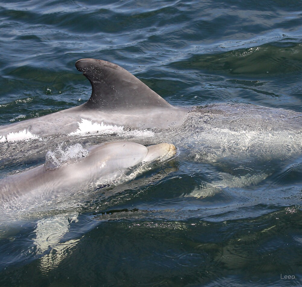 ~ Port River Dolphins ~ by Leeo