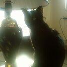 black lamp black cat by catnip addict manor