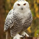 Pepsi, A Snowy Owl by Bryony Griffiths
