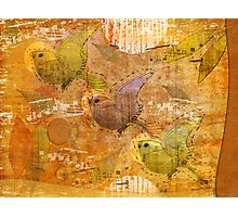 song birds Photographic Print