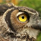 Darwin, A Great Horned Owl by Bryony Griffiths