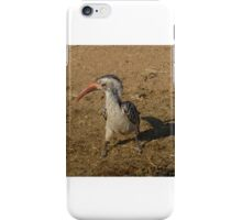 Southern Red Billed Hornbill in Black Rhino Reserve, South Africa iPhone Case/Skin