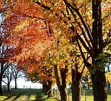 Autumn Lane Near Sundown by John Carpenter