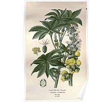 Favourite flowers of garden and greenhouse Edward Step 1896 1897 Volume 3 0254 Castor Oil Plant Poster
