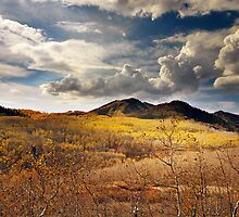 Aspens Blanketing Hillside by Ryan Houston