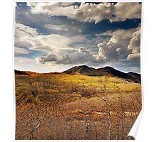 Aspens Blanketing Hillside Poster