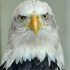 eagle eye by stampmouse