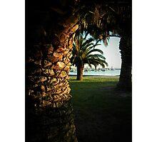 Palm Photographic Print