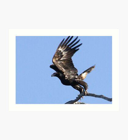 Eagles Away-2 Art Print