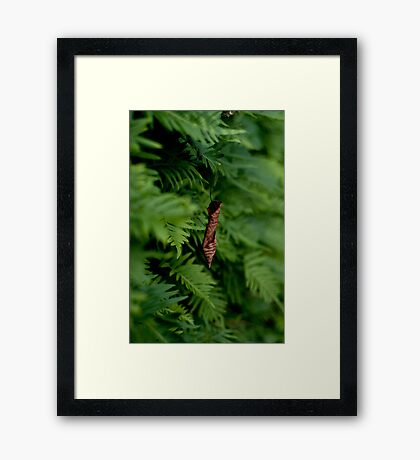 hanging out Framed Print