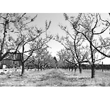 Cider in the Afternoon Photographic Print