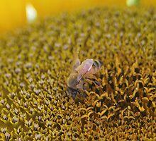 Bee at Work by kaety