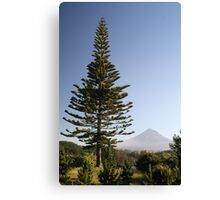 Fir Tree Canvas Print