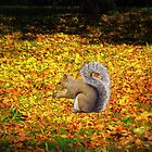 Squirrel In Autumn Leaves by Linda Miller Gesualdo