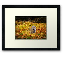 Squirrel In Autumn Leaves Framed Print