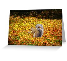 Squirrel In Autumn Leaves Greeting Card