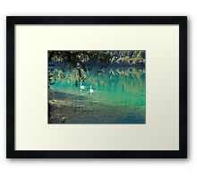 swans on the 'clear water of a lake (Italy) Framed Print