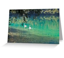 swans on the 'clear water of a lake (Italy) Greeting Card