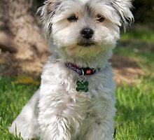 Daisy Dog  by Helen Vercoe