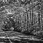 Tunnel of trees black and white by Theodore Black