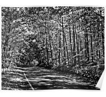 Tunnel of trees black and white Poster