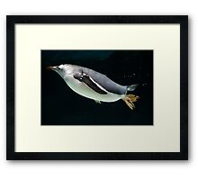 """Penguin Pose"" Framed Print"