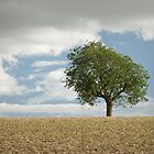 Tree by photontrappist