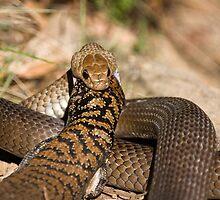 Reptilian Lunch - Pseudonaja textilis by PurelyPrime
