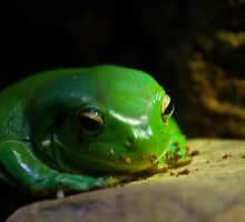 """Just a little Green"" - Frog by Sophie Lapsley"