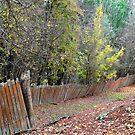 Hill End Fences by Bev Woodman