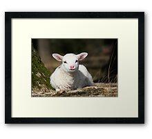 Lamb in Spring Framed Print