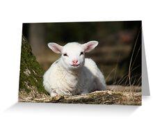 Lamb in Spring Greeting Card
