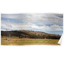 Tasmanian Countryside 1 Poster