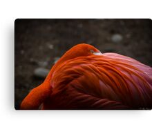 P.Y.T. (Pretty Young Thing) Canvas Print