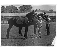 Percheron Beauties Poster