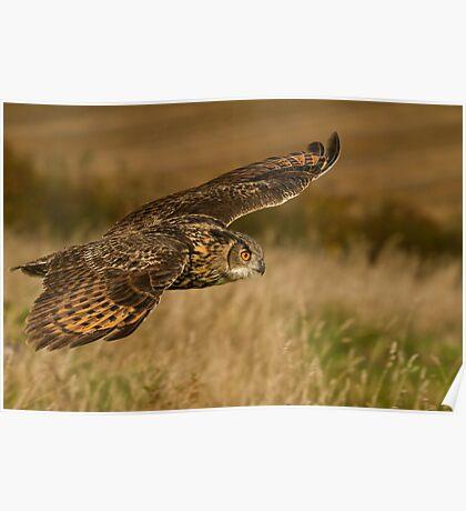 Kaln - Eagle Owl Poster