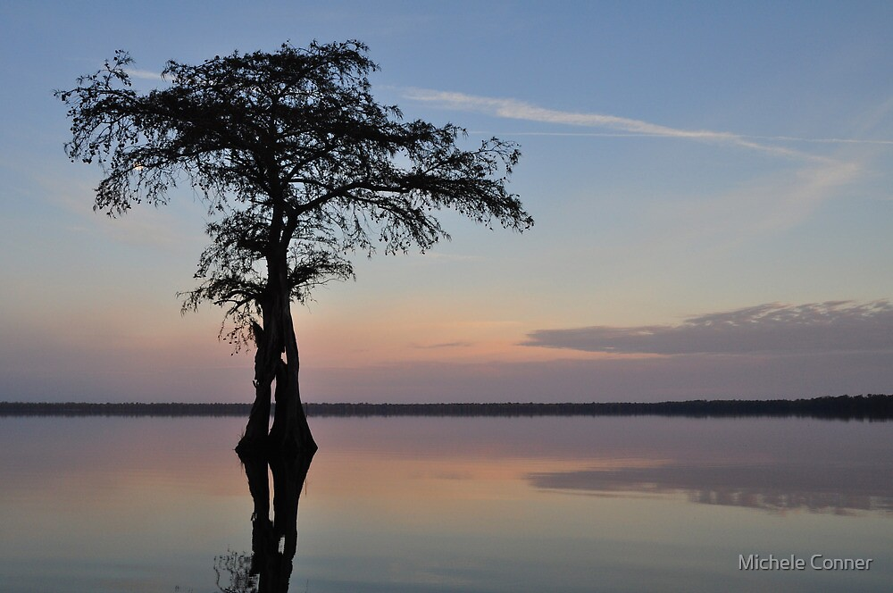 Cypress sunrise by Michele Conner