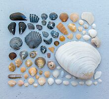 Sally Sells Sea Shells and I bought 'em by Alex Tonetti