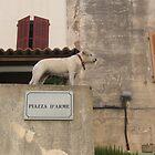 On Guard.  Calvi, Corsica by Sarah Howes
